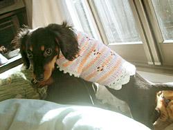 新作セーター:20050122