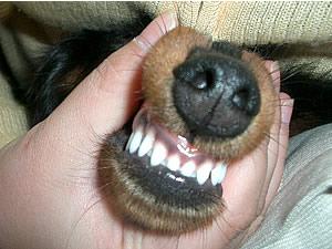 生え揃った前歯