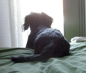 ベッドで外を眺めるココア