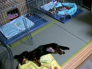 同じ体制で眠るココアとアクア