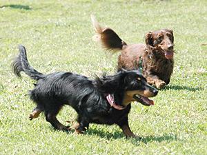 公園で遊ぶココア