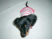 ピンクのボーダーセーター